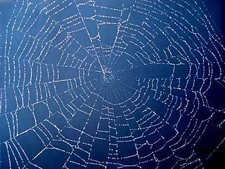 web-on-blue-320px